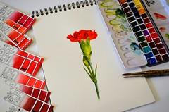 Carnation - VIDEO (espero85) Tags: flower video carnation tutorial