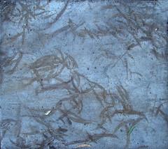 eucalyptus leaf sidewalk ghosts (lisafree54) Tags: blue plant nature leaves silhouette leaf pattern ghost gray free sidewalk eucalyptus curve shape curved cco curving freephotos