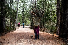The Long Walk Home (aaron.beitzel) Tags: wood travel nepal forest canon 50mm women basket firewood himalayas rara mugu villager vilage niftyfifty