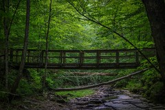 How do you want to traverse the earth? (croleyy70) Tags: lighting bridge trees green forest canon outdoors photography woods dynamic hiking earth weekend kentucky wilderness