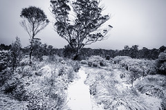Paul Brandon Overland 2016 (13 of 140) (Paul Brandon  Rambling House Photography) Tags: mountain snow mountains walking nikon rainforest hiking australia tasmania cradle iphone