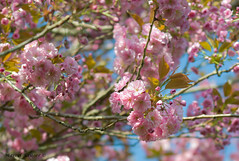 Frhling III (Marschall2) Tags: pink flowers trees plants hot flower tree photoshop photography spring nikon warm fotografie pflanzen rosa sigma blumen blume makro blatt sonne bltter bume baum frhling pracht lightroom blten blhen schn hbsch
