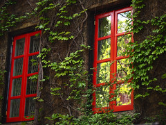 Red windows (mcu202) Tags: new york city nyc windows red newyork color green nature vines ivy windowpane