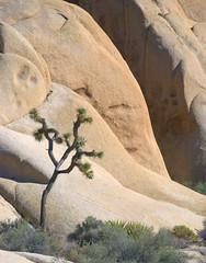 DSC_9240 (PhotoCatcher0430) Tags: california landscape desert joshuatree