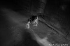 Palermo Cats 3 (bavarianview) Tags: italien blackandwhite bw italy animal cat europa europe italia eu sicily katze palermo sicilia tier sizilien schwarzweis sizilien2013
