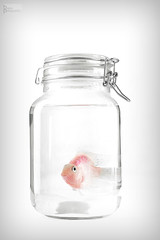 Little Fish ! (iBaraa) Tags: fish macro nikon photographer like here micro iam would 800 d800 sumsung   2470    photographys        puplish       d800e