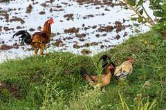 Farm Fields (GDDigitalArt) Tags: road summer india farm rainy monsoon suburbs hyderabad
