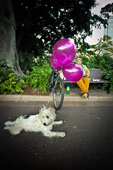 <<Purple Balloons>> (www.jerrybei.com (5 million views)) Tags: sydney australia streetportraits interestingpeople 50luxasph 50mmf14summiluxasphmlens leicam240 leicamtyp240 zeiss15mmf28distagontzm zeiss15zm