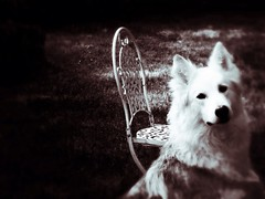 Garden Dog (roxy_foster) Tags: dog husky utonagan