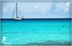 Fly By (ilandman4evr) Tags: beach birds island boat beachlife sail stthomas charlotteamalie d7000 ilandman4evr