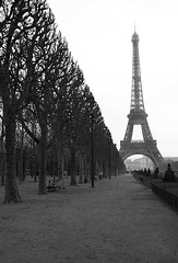 Tree line to the Tower (tatehusband) Tags: park trees winter blackandwhite bw paris france cold tree lines misty eiffeltower