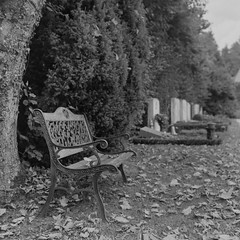 Autumn On The Cemetery (_-0-_) Tags: autumn white black 6x6 film cemetery leaves bench kodak tmax bad mat 124g medium format rodinal yashica yashicamat yashicamat124g griesbach