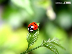 Lady Bug Animals