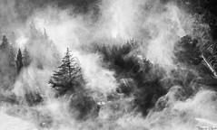La niebla (Francis Capote) Tags: bw blanco rboles y negro bosque rbol niebla