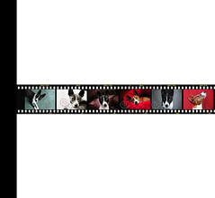 flickr-cover-film-strip (jezandia) Tags: