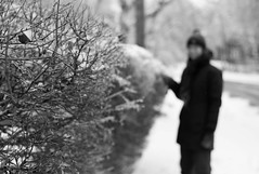 (j-riviere) Tags: leica winter people toronto canada ice nature bokeh hedge icestorm m8
