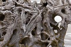 IMG_7527 (karen.73) Tags: driftwood jekyllisland cvs 2013 boneyardbeach
