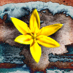 Sonic Bloom no.165 (dek dav) Tags: music abstract color art colors rock collage digital photoshop project poster photo lyrics mixed media artist arty song album journal band surreal manipulation sonic pop indie daisy bloom deviant 365 concept songs alternative tripping