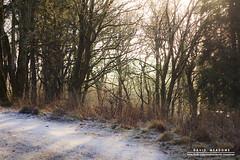 Morning Light (DMeadows) Tags: morning trees light cold abandoned ice grass reeds landscape scotland frozen warm frost ruin abandon tones waterside ironworks patna dalmellington dunaskin davidmeadows dmeadows davidameadows dameadows
