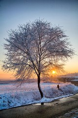 winter (Enrique J. Mateos Mtnez) Tags: winter tree nieve nevada rbol canon5d invierno sesea