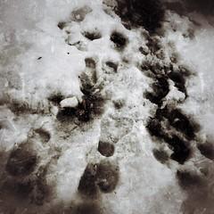 2/19/14 Footprints (Karol A Olson) Tags: snow melting mess footprints gravel feb14 project3652014 fmsphotoaday mdpd2014 vision:plant=0791 vision:outdoor=0883 vision:snow=0607