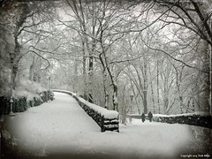 Remembered Fondly, Snows of the Past (Trish Mayo) Tags: winter snow texture walking landscape paths pathways forttryonpark thebestofday gnneniyisi