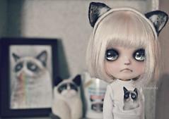 Grumpy Sunday (Lawdeda ) Tags: cat fun little erin sauce collection blythe custom grumpy grumpycat fbl deir ixnay tardar grumpysunday