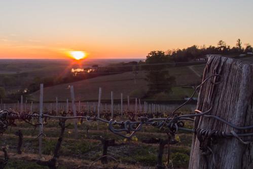 Coucher de soleil sur les vignes du Château Biac
