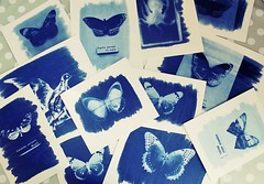 Cyanotypes (alicehopedenny) Tags: blue bird london museum work butterfly skeleton photography wings exposure experimental patterns butterflies blues double negative octopus prints inverted exam horniman cyanotype sunprint cyanotypes alevel