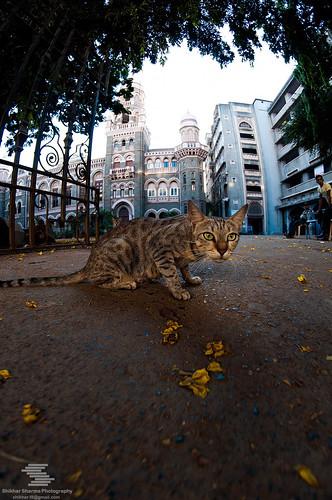Cat guard on duty