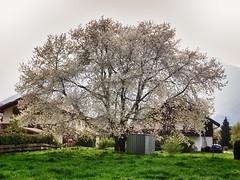 Unterfössen Frühling