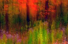 edwinloyolaNewYorkPortfolioReviewFall04 (Edwin Loyola) Tags: autumn winter summer abstract fall nature seasons fineart fourseasons icm esl intentionalcameramovement edwinsloyola edwinloyola edwinloyolaphotography eslphotography