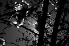 Smoking snow (Giuli Musico) Tags: nikon neve d610