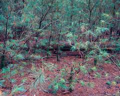 Intimate Nature (martinwozenilek) Tags: wood mamiya film nature analog forest mediumformat kodak iso400 6x7 portra rz67