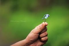 Forget me not from him (|| Rehnumah Insan ||) Tags: blue summer flower macro green nature fauna contrast season prime spring flora dof durham little bokeh smooth 85mm single bunch forgetmenot 85mm14 canon600d