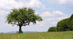 Gundelfingen landscape V (tillwe) Tags: tree green landscape spring blackforest tillwe rebberg gundelfingen singulartree 201605
