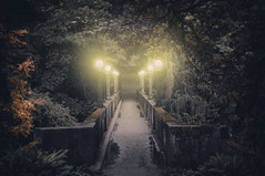 i will light you the way (coma_wink) Tags: bridge trees light forest lights mysterious passage brcke wald bume mysteris