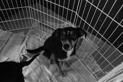 IMG_1612 (Mila Santa's Photography) Tags: cats dogs canon photography gatos ces cachorros fotografia animais ong srd adoo unibh adotartudodebom fotografiasolidaria caopartilhe caopartilheong feiradeadocao