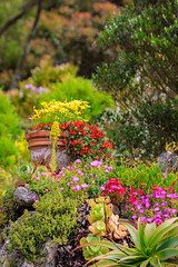 7D2L6587 (ndall) Tags: flowers scilly tresco
