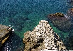 20140920_4 Ladder, rocks, & green ocean | Antibes, France (ratexla) Tags: ocean travel sea vacation favorite holiday france travelling beach nature water beautiful strand landscape coast marine scenery europe mediterranean riviera earth scenic clear journey shore traveling vatten interrail antibes semester havet hav interrailing tellus 2014 eurail tgluff themediterranean europaeuropean tgluffning tgluffa eurailing earthporn photophotospicturepicturesimageimagesfotofotonbildbilder resaresor canonpowershotsx50hs 20september2014 ratexlasantibestrip2014