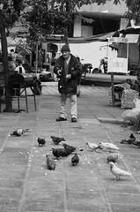 Senior Feeding Doves (funkallen) Tags: street white black senior bread feeding pigeons asuncion paraguay doves
