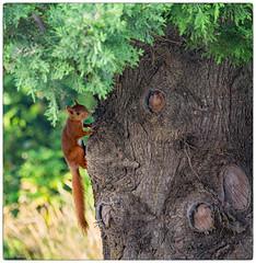 en pause (Paloudan) Tags: animaux cureuil squirrel