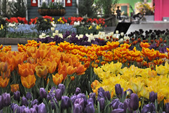 2016-03-11_0184n_amand (lblanchard) Tags: amand displaygarden 2016flowershow