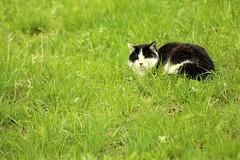 Sleeping Cat (gripspix (OFF)) Tags: 20160404 archiv priorberg dettingen horb badenwrttemberg germany deutschland cat katze