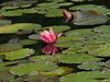 P1010538 (karsheg) Tags: sculpture art nature gardens evening newjersey spring scenery artsy groundsforsculpture gfs