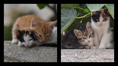 Pet terapy (danars) Tags: animali sicilia marsala fico gattini imicettidinutella