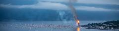 Guinness World Record - Pano (jforberg) Tags: world party records water norway night fire midsummer guinness celebration bonfire lesund aalesund 2016 slinningsblet