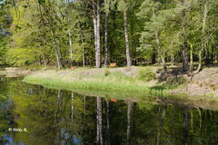 Have a rest (heikecita) Tags: bench bank wasser water see lake natur nature reflection reflektion wald forest panasonic dmcghs