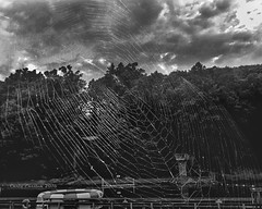 The Tangled Webs We Weave (Chris Ehrlich Photography) Tags: chris bw lake photography nc center conference webs caraway ehrlich
