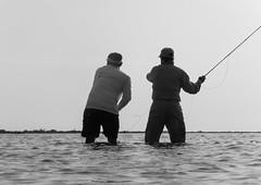 Hunting Palometa (E. Hanson) Tags: mexico flyfishing ascensionbay